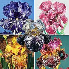 Batik Iris Collection