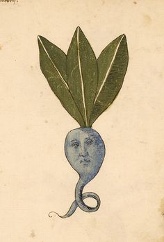 upennmanuscripts:  This plant on fol. 42r of LJS 419 is not the Oddish we need nor the one we deserve right now, and I for one am terrified. Those hollow eyes are the stuff of nightmares! This herbal seems to have a penchant for that.   Manuscript description and digital images can be found here at OPenn, and you can download an ebook version here.