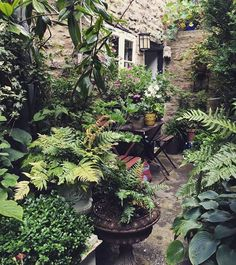 Changes Caused by Unsustainable Practices Courtyard garden, Frome. Small Courtyard Gardens, Small Gardens, Outdoor Gardens, Front Courtyard, Amazing Gardens, Beautiful Gardens, Garden Cottage, Garden Photos, Tropical Garden