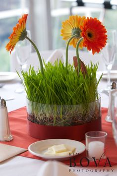 wheat grass with gerbera daisies centerpiece,  designing for Perfect Princess Events   Kim Bova Photography
