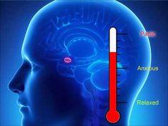 Amygdala hijack fight or flight response|how to stop anxiety - YouTube
