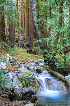 I'll be here in a couple of weeks. :)   Hare Creek in Limekiln State Park, Big Sur