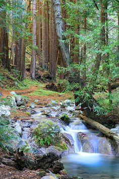Hare Creek in Limekiln State Park, Big Sur