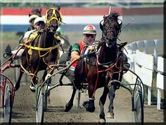 Go to some Harness Races like my Papo did.