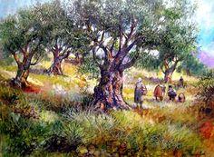Raccolta delle olive Francesco Mangialardi