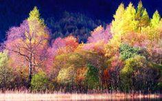 arboleda de colores