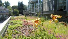 25 Beautiful Rooftop Gardens