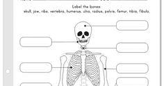 Juegos, actividades y software educativo para niños y niñas. Human Skeleton Model, Human Body Systems, Physical Education, Ribs, Bones, School, Recipes, Teaching Resources, Human Body Bones