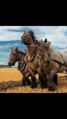 Draft horses, pulling a plow.  What a brautiful sight!!! Ponys, Horse Photography, Clydesdale, Work Horses, Big Horses, All About Horses, Horse Love, Draft Horse Breeds, Draft Horses