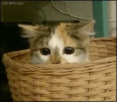 Wanna Play Hide & Seek With Catty? http://ift.tt/2lA8Zd7