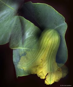 Psychedelic Garden Photography - This Botanical Photography Series is Unique and Lively (GALLERY)