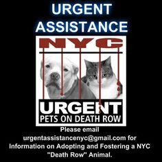 4 HELP 2 #SaveDEATHROWDOGS EMAIL THE HELP DESK! https://www.facebook.com/Urgentdeathrowdogs/photos/a.611290788883804.1073741851.152876678058553/830894470256767/?type=3&theater…