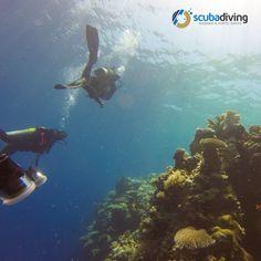 http://www.scubadivingmadeira.com/ #Scubadiving #Madeira #PortoSanto