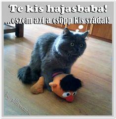 HUMOROS, ARANYOS ÁLLATOS KÉPEK, feliratos képeslapok Humor, Cats, Google, Animals, Gatos, Animales, Animaux, Humour, Funny Photos