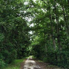 Residents love to explore the Nocatee Preserve!