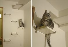 DIY kitty stairway using the Ikea Bjarnum / Jarpen shelf system. My cats would love this! Diy Cat Shelves, Ikea Shelves, Floating Shelves, Cat Climbing Shelves, Ikea Cat, Cat Perch, Cat Hacks, Cat Condo, Pet Furniture