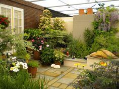 aménagement petit jardin dallé avec des plantes vivaces d'ombre et des arbustes…
