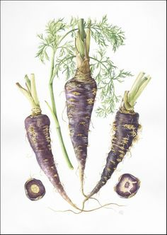 Botanical Sketches and Other Stories: Vegetables in an Arab Spring