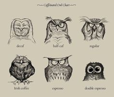 Since I really like owls.............Cool Products & Ideas Caffeinated Owl Chart by Dave Mottram