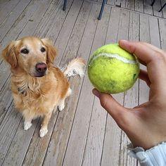 puppy playtime #throughglass