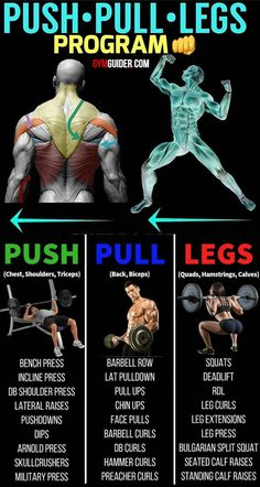 """The push/pull/legs split is a very simple training method in which you split your body into three parts. And each part is then trained on its own separate day.In the """"push"""" workout you train all the. Push Pull Legs Workout, Push Workout, Workout Splits, Gym Workout Chart, Full Body Workout Routine, Gym Workout Tips, At Home Workout Plan, Dumbbell Workout, Workout Schedule"""