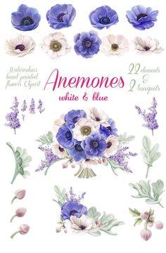 Acquerello fiori Clip Art bianco e blu anemoni elementi