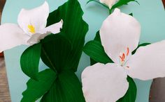 Paper Flower Trillium