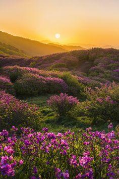 ~Chobbit Hobbit's Nature Corner~ - Chobbit Hobbit& Nature Corner — beauty-belleza-beaute-schoenheit: From… - Beautiful World, Beautiful Places, Beautiful Pictures, Beautiful Flowers, Landscape Photography, Nature Photography, Nature Aesthetic, Nature Scenes, Nature Pictures