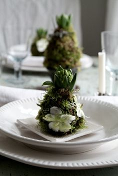 Hyacinths wrapped in moss. For christmas tabel.