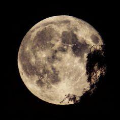 An old friend. — #instacanvas #instagram #instaart #moon #fullmoon #tree #night