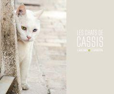 20130611 Cassis 0714 Les chats de Cassis