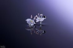 Crystal Tears by Miki Asai on 500px