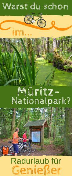 Ein Urwald mitten in Deutschland. Entdecke den #Müritz-#Nationalpark mit seinen Seen, Wiesen, Wäldern und Mooren bei einem #Radurlaub. #Reisen für Individualisten. #Deutschland