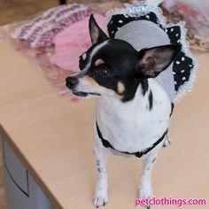Minnie Dog Dress in Grey