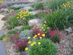 Native Australian wildflower garden at Mount Annan Mount Annan, Australian Wildflowers, Native Australians, Wild Flowers, Nativity, Cottage, Landscape, Garden, Outdoor Decor