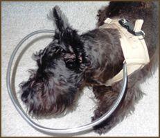 Dog Cone Alternative | Dog Head Protection | Blind Dog Vest