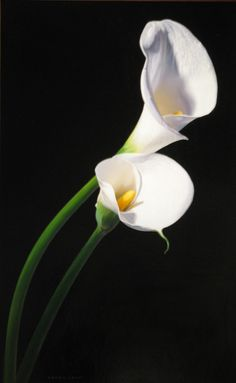 """Two Callas"" - Luigi Benedicenti Elegant Flowers, Exotic Flowers, White Flowers, Beautiful Flowers, Calla Lillies, Calla Lily, My Flower, Flower Art, Trees To Plant"