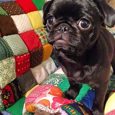 Heidi Parkes @heidi.parkes Instagram photos   Websta My grandmother and I made this quilt for my brother & his wife!  This is their beautiful pug Penelope.