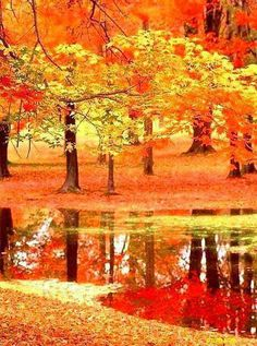 Gorgeous red orange and yellow trees