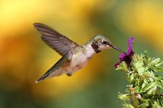 How to Please Google in a Post-Hummingbird World #marketing #seo #smallbusiness