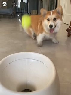 BALL LAUNCHER MANIA™ - They say every dog knows how to make a human happy, but not every human knows how to make a dog hap - Cute Funny Animals, Cute Baby Animals, Funny Dogs, Animals And Pets, Corgi Funny, Funny Dog Videos, Cute Puppies, Cute Dogs, Dogs And Puppies