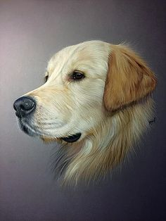 Golden retriever in pastel