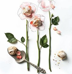 Pinched Rosewater & Rhubarb Macaroons / Recipes & Food Styling by Diana Perrin of Casa de Perrin, Prop Styling & Artwork by Alicia Buszczak and Photography by Bricco #food #style