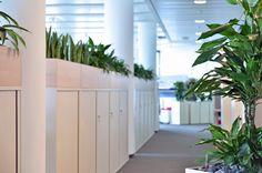 raumbegr nung innenraumbegr nung baumhaus pflanzenpflege b ropflanze hydrokultur interior. Black Bedroom Furniture Sets. Home Design Ideas