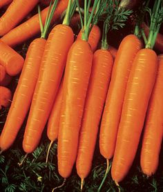 """Carrot, Scarlet Nantes   Easy to grow and full of vitamins.   65-75 days. 6-8"""" long. Finely-flavored carrot does well as a bunching carrot and as a storage carrot.   Sun: Full Sun  Height: 4-8 inches  Spread: 4 inches  Days to Maturity: 65-70 days  Sowing Method: Direct Sow  Fruit Size: 6-8 inches"""