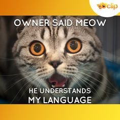 This is for all the cat lovers! #HappyInternationalCatDay #SaturdaySpecials