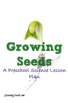 Do you want your preschooler to learn about seeds? Try this preschool science lesson plan for growing seeds