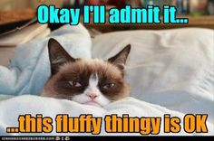 Grumpy Cat LIKES something?
