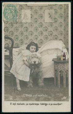 Poodle Caniche Dog original vintage old 1910