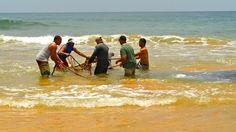 No fue fácil sacar el cachalote, que se cree pudo haber abortado el día anterior, hacia la orilla. Foto José E. Maldonado / www.miprv.com